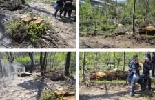 Il disboscamento della Val Clarea: ecco l'opera compatibile con il territorio
