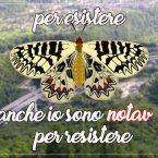Difendiamo la farfalla Zerinzia della Val Clarea (VIDEO)
