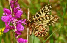 La farfalla No Tav e le menzogne di Telt