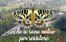 In difesa della zerynthia polyxena, farfalla No Tav (VIDEO)
